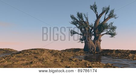 baobab tree on watered desert terrain