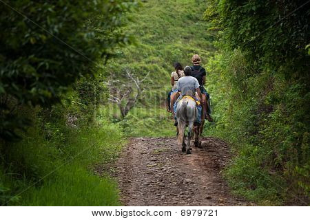 Tourists On Horseback In Costa Rica