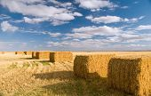 stock photo of hay bale  - ripe square hay bails ready for use - JPG