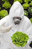image of genetic engineering  - Genetic modification Man in protective white suit holding a modified lettuce - JPG