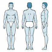 picture of male body anatomy  - Man body model - JPG