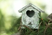 stock photo of nesting box  - Decorative nesting box on branch - JPG