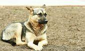 stock photo of stray dog  - Stray dog - JPG