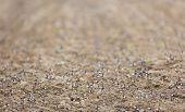 pic of buckwheat  - Sprouts of buckwheat - JPG