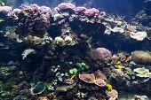 picture of undersea  - undersea world - JPG