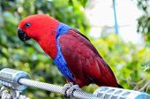 pic of bird paradise  - Parrot Tropical Bird with a Colroed Father - JPG