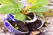 foto of mischief  - Young plant in a broken flower pot - JPG