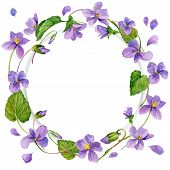foto of violet flower  - wreath of forest violet and young green grass - JPG