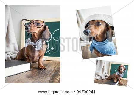 Collage Red Dachshund Dog On Wooden Table