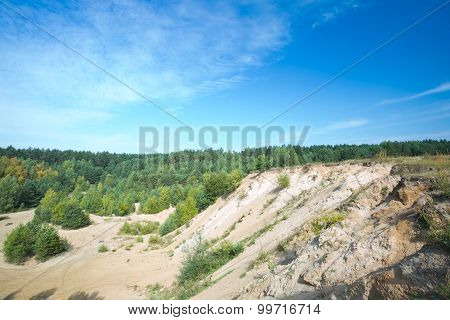 Sandhills And Pine Forest Under Blue Sky