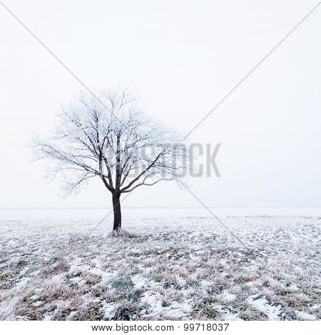 Lonely tree in snow on a winter morning