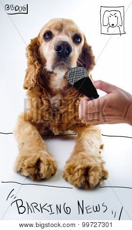 Cute English Cocker Spaniel journalist puppy lying in front of a white background with reporter micr