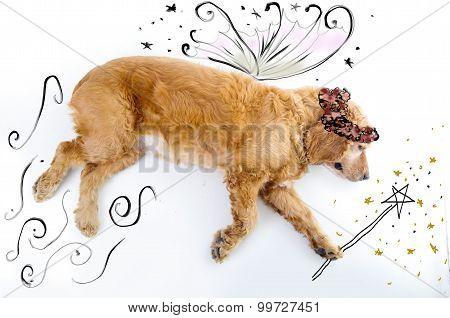 Cute English Cocker Spaniel fairy puppy in front of a white background with wings and magic wand ske