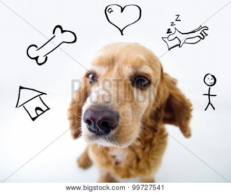 Cute thoughtful English Cocker Spaniel puppy in front of a white background with iconic style house,