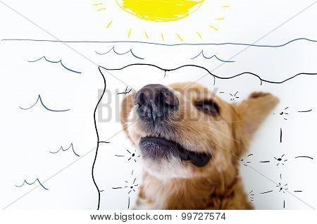 Cute relaxing English Cocker Spaniel puppy in front of a white background with beach setting sketch