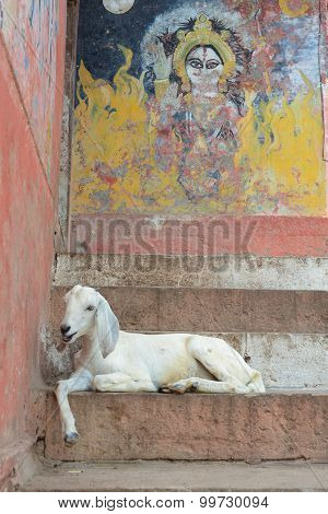 Goat On The Steps Of The Varanasi Ghats, India