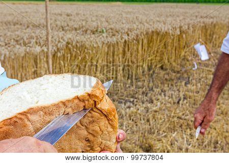 Farmer Is Cut Bread With Knife.