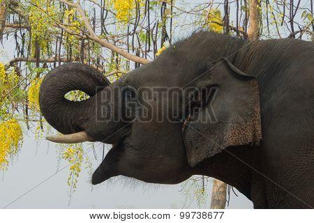 Elephant Hungry