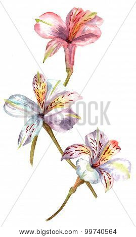 Watercolour branch of flowers (alstroemerias), dusty pink and white