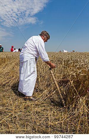 Farmer Is Cutting Wheat.
