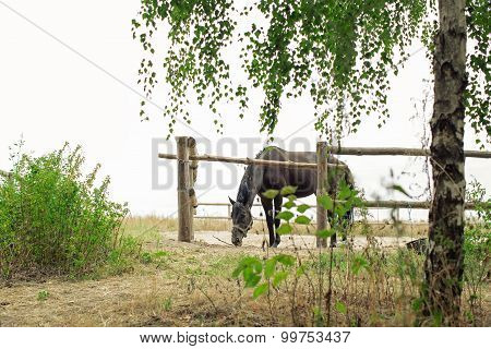 Horse Eating Hay In The Corral Summertime Outdoors Rural Scene