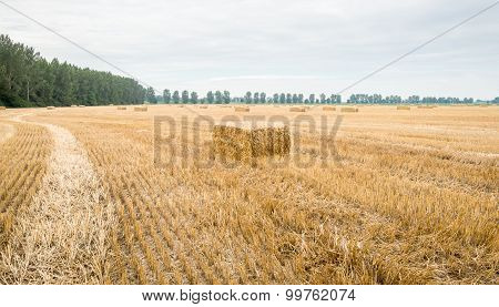 Large Stubble Field With Packs Of Straw