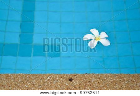 Frangipani On Water Pool