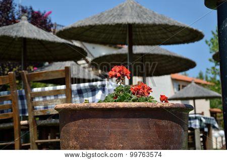 Red Muscat In Greek Restaurant