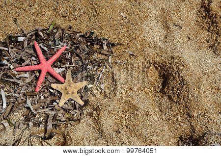 Sea Stars, Grass And Shells