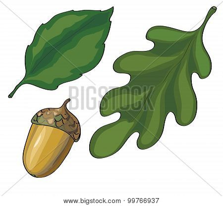 leaves and acorn vector