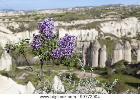 Lilacs on the edge of the valley of love. Cappadocia. Turkey