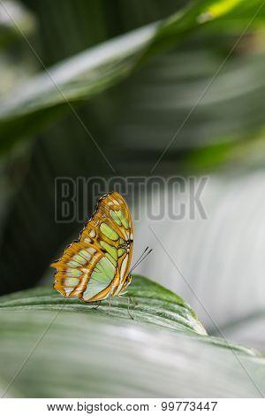 mariposa naranja sobre hoja verde