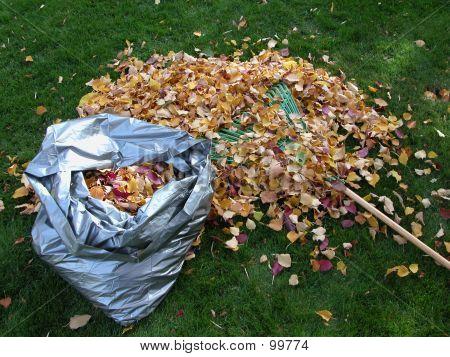 Bag Of Leaves