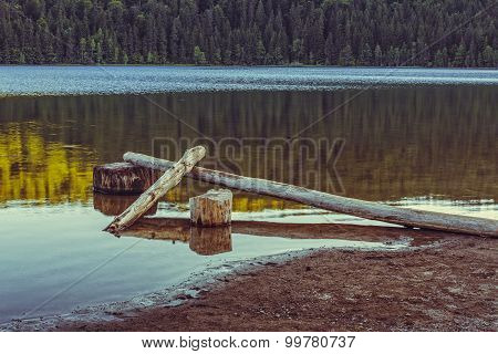 Lake Scenery With Fallen Peeled Trees