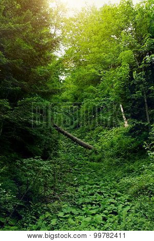 Green Leafy Forest