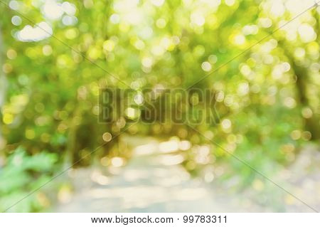 Blurred Forest Pathway Background