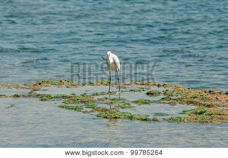 Egret Caught Fish