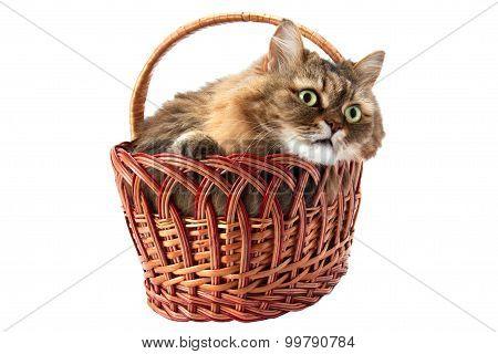 Cat In A Wicker Basket