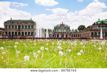 Dandelions in of the Art Gallery Dresden