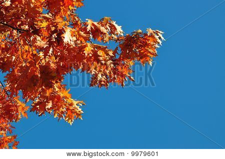 Autumn branches of an oak
