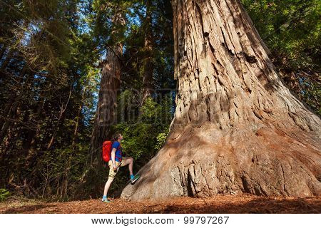 Guy stands near big tree in Redwood California