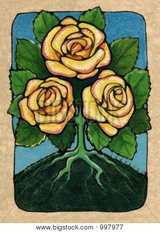 Three Of Roses