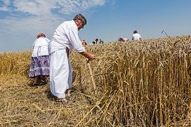 foto of scythe  - Farmer is reaping wheat manually with a scythe in the traditional rural way - JPG