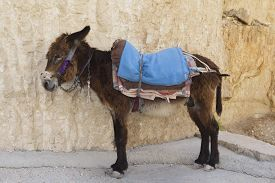 picture of wild donkey  - Donkey resting at the rock in Israel - JPG