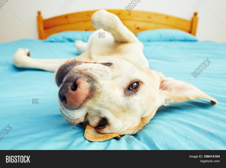 Dog lying on back