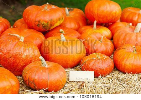 Bunch Of Plump And Juicy Holiday Pumpkins