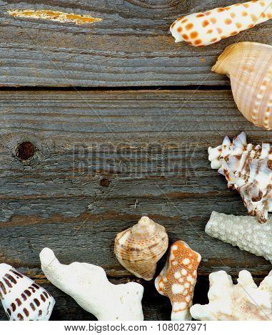 Border Of Conch Sea Shell
