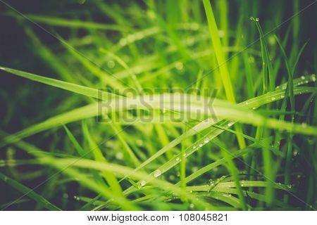 Spring Morning Grass Retro