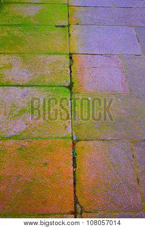 Santiago de Compostela end of Saint James Way moss detail on soil