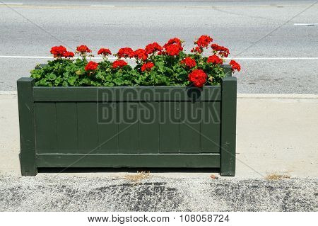 Geraniums in Downtown Lockport